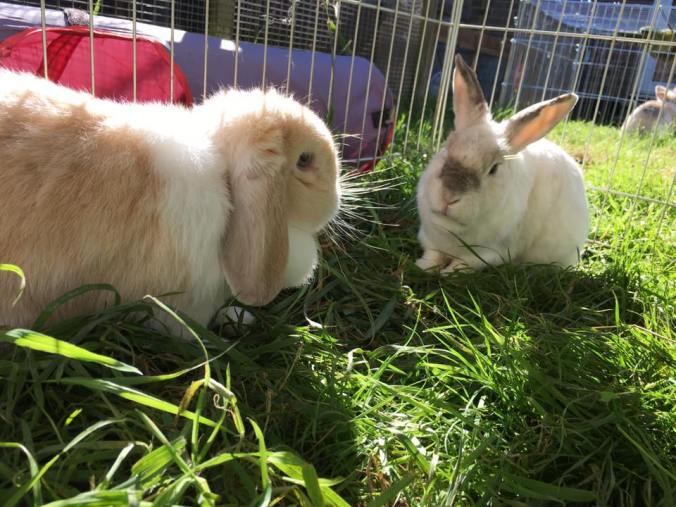 rabbits-in-cold