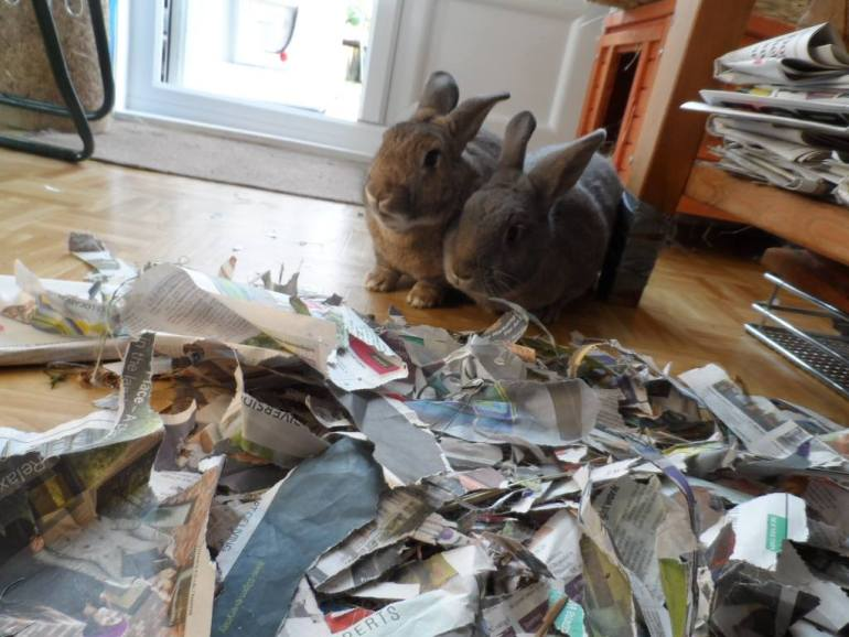rabbits-are-messy