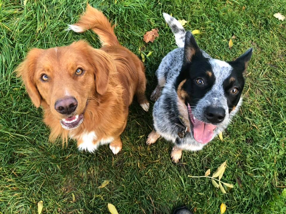 How To Run A Successful Pet Care Buisness