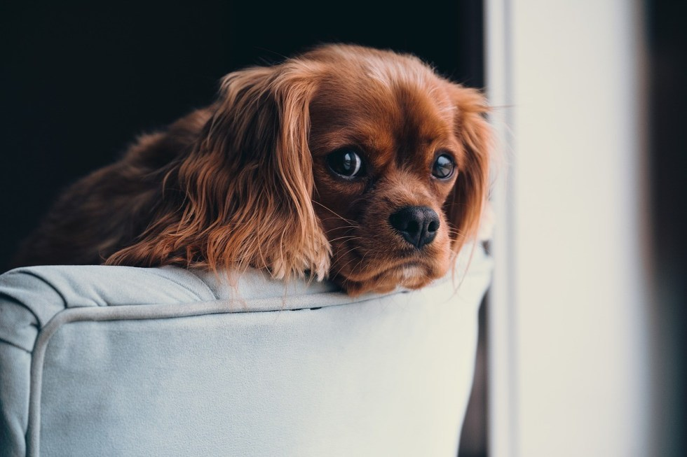 How To Choose The Best Dog Sitter