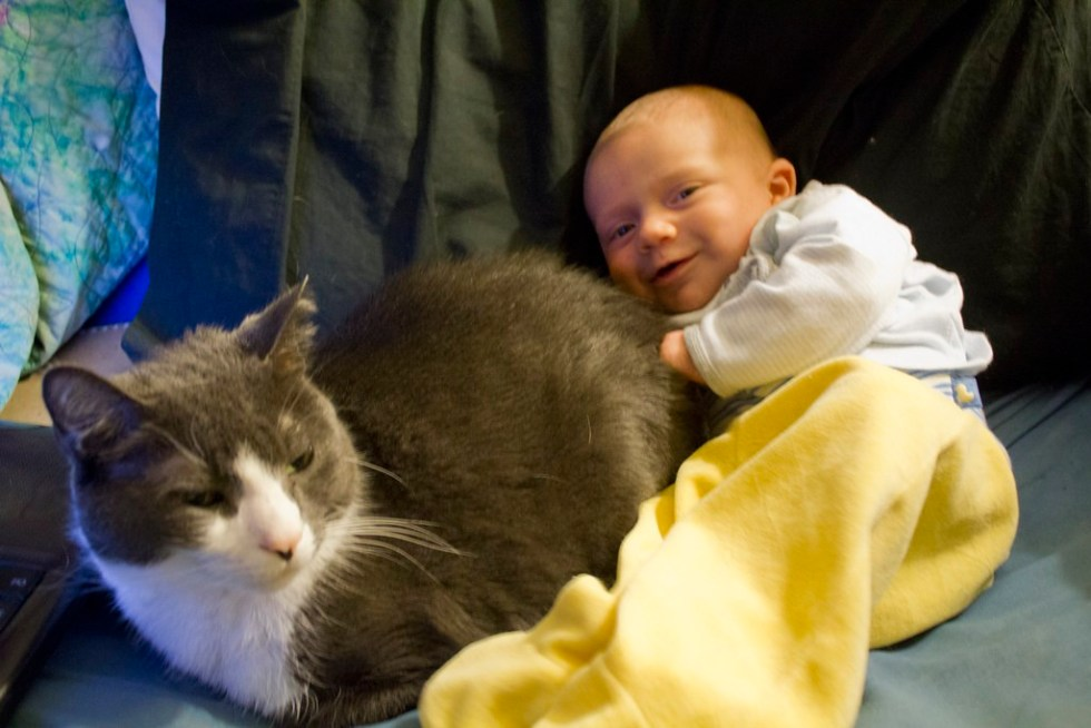 How Do I Prepare My Cat For The Arrival Of A New Baby