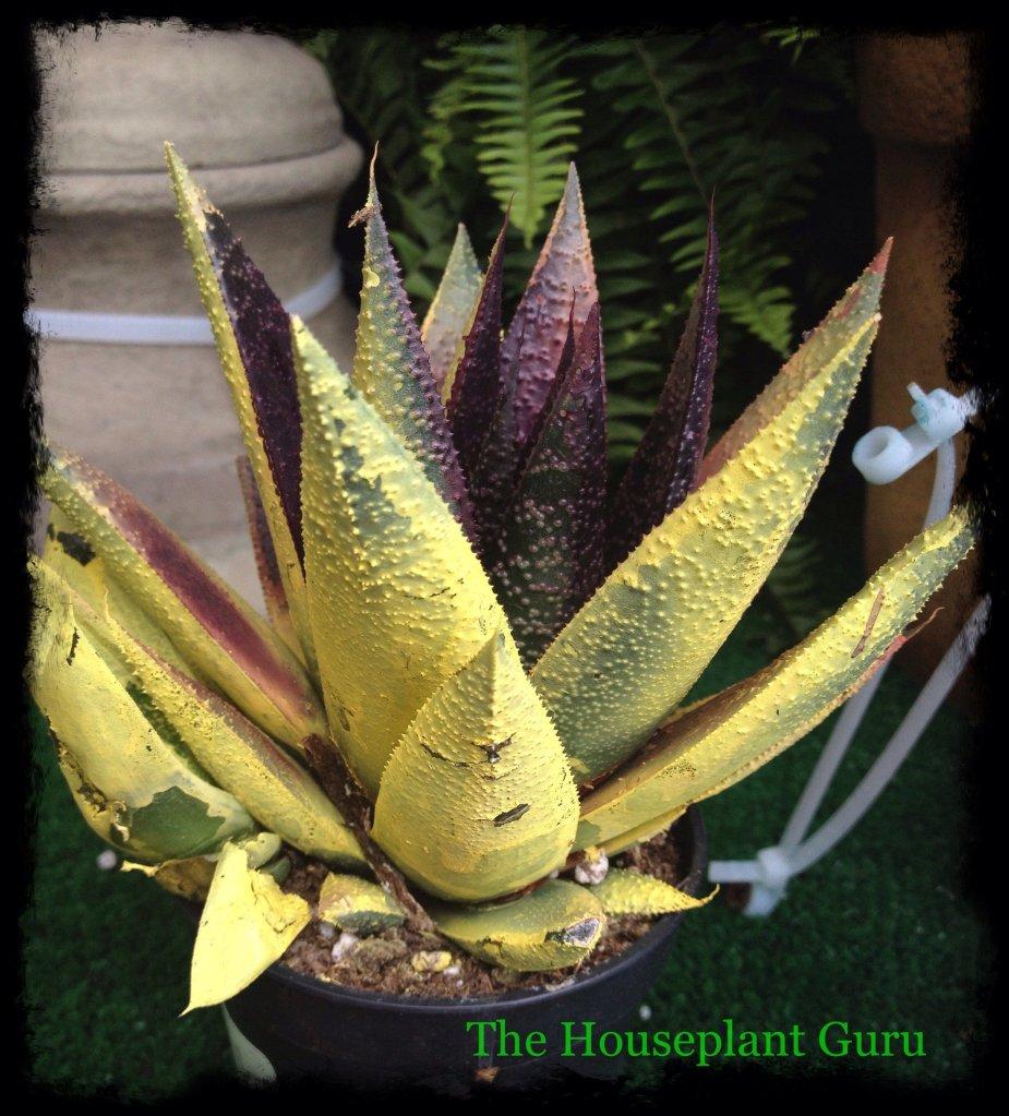 Cactus and Succulent Sabotage