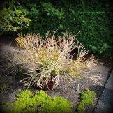 Euphorbia or sticks on fire