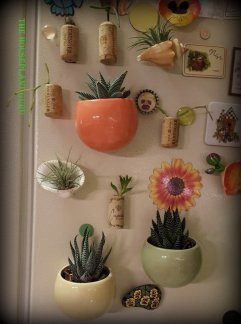 lynns plants and living trends 063