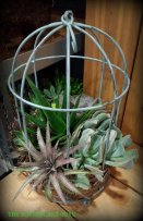 A birdcage full of succulents