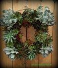 Square wreath of succulents