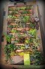I love this shutter full of succulents