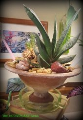Compo'd fiori container with a Gasteria in an ash tray