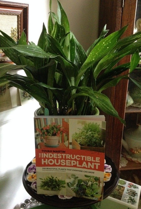 Tovah's new book with a 'Milky Way' Aspidistra