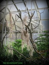 Spooky trees with Spanish moss