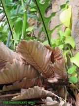 Close up of oak leaf fronds