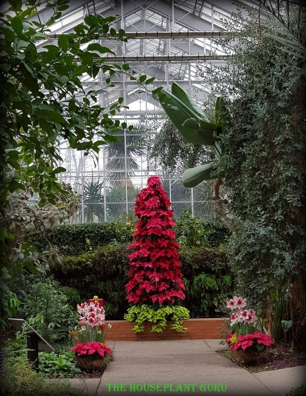 Conservatory Christmas
