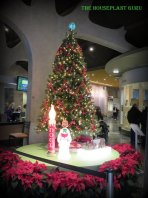 A beautiful tree to see as I watied in line