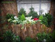 Beautiful plantings