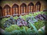 Peperomias as shrubs