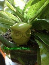 Green owl in my crocodile fern