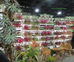 Pallets used to display bromeliads