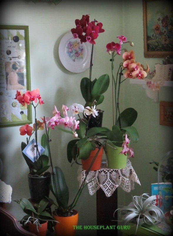 My collection of orchids