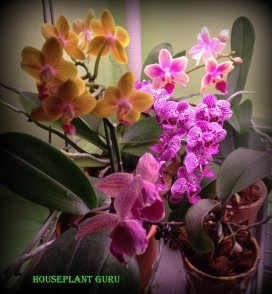 My orchids in bloom last year