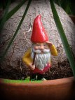 gnome, flowers 048