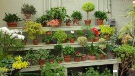 Des Moines Botanical Garden 141