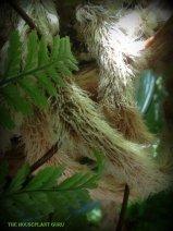 Close up of the furry rhizomes