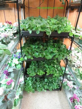 Plants that need to be transplanted