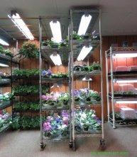 Growing shelves