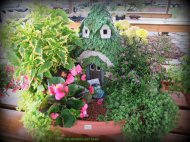 Annuals used for this fairy home