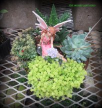 Small fairy garden made with succculents