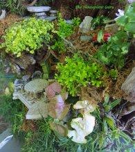 Golden baby's tears Soleirolia soleirollii 'Aurea', Syngonium, Selaginella, Syngonium