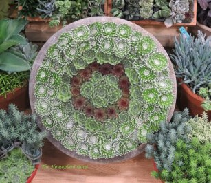 Succulent wheel at Cultivate '16
