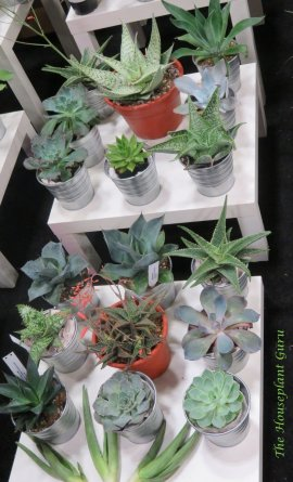 Their offerings of succulents