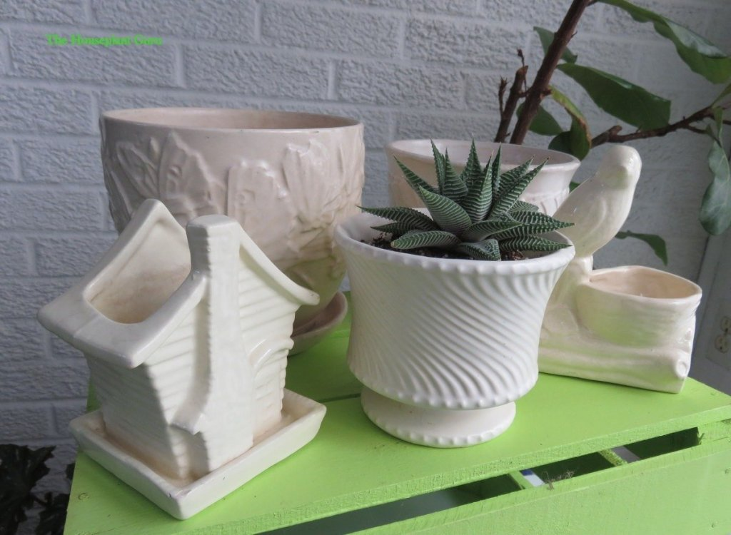 Antique containers, one with a haworthia