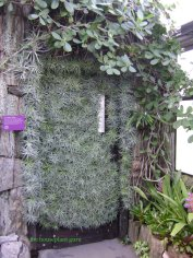 Tillandsias covering a door at Longwood Gardens