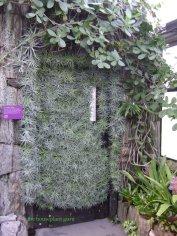 Tillandsias covering a door at Longwood Gardens
