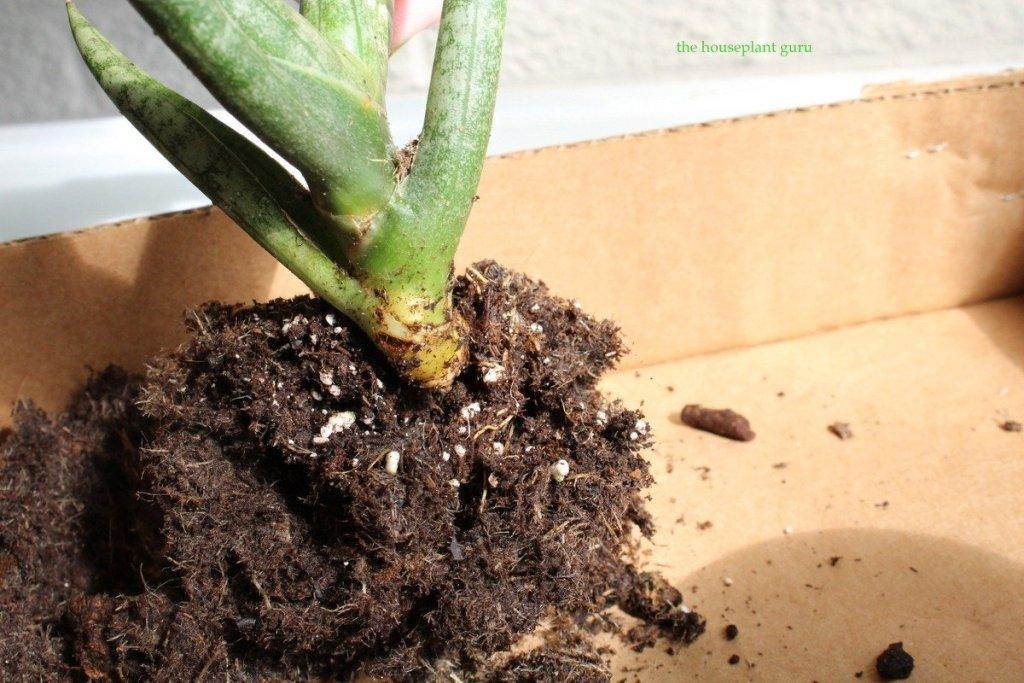 soil removed from stem