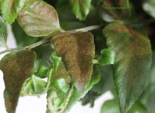 Closeup of spores