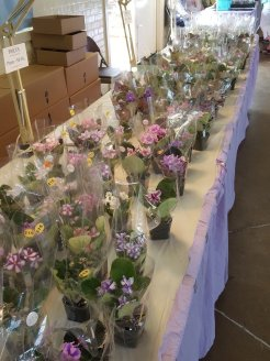 The sales table from Lyndon Lyon Greenhouses