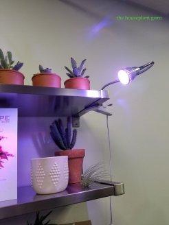 grow lights and plants