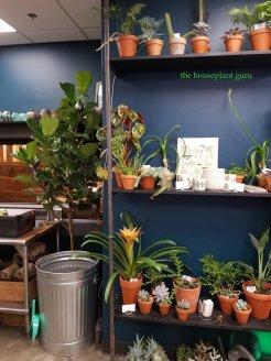 Houseplants! and potting medium