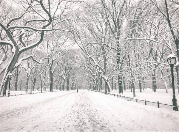 PHOTO | New York City: Central Park Elms, Lower Eastside, Midtown Manhattan #NYC #twitter