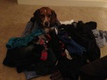 Helping with laundry