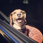 astriker79_-_September_13__2015_at_0114PM_-_Jasmine_now_believes_that_life_after__OldBlue_will_be_okay_._Thanks__UncleNick__nmzellich__beagles__carride__mansbestfriend