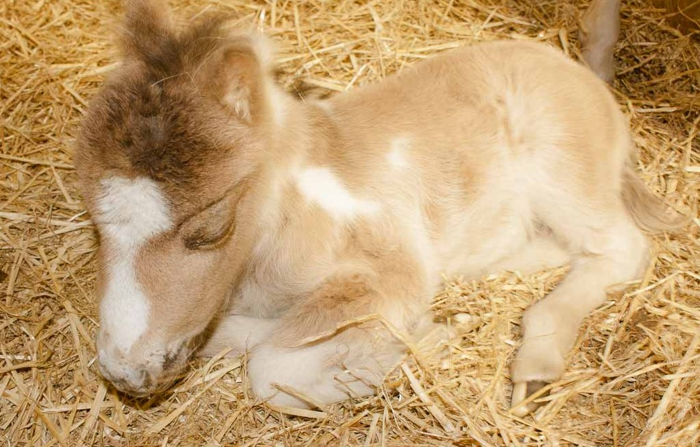 baby foal on farm in Spain working holidays