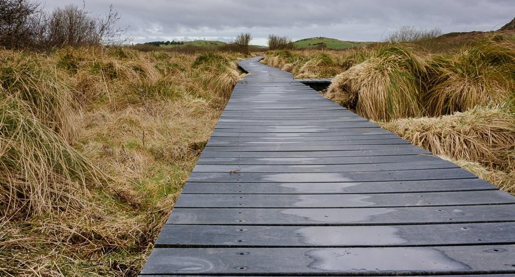 Fenor Bog, Copper Coast in Waterford, Ireland