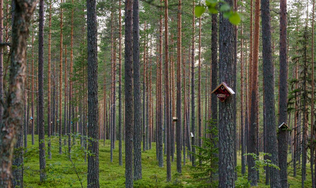 Wellness travel in Gold of Lapland, Sweden