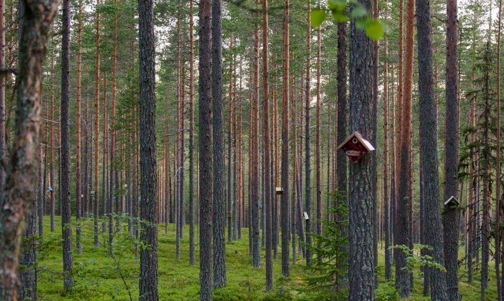 Granö Beckasin, wellness travel