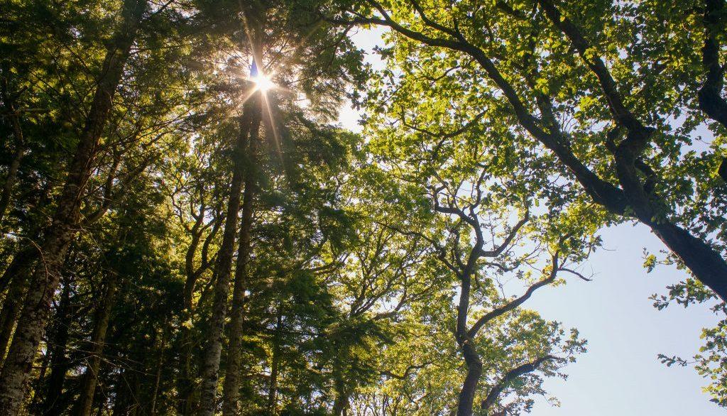 Glengariff Nature Reserve - Ring of Beara
