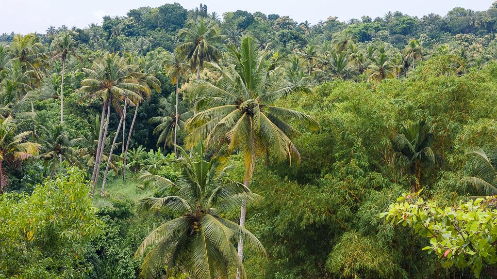 yoga in kerala - palm trees
